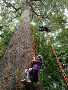 escalada em árvores na Amazônia
